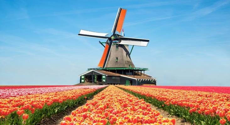 Cánh đồng Hoa Tulip Hà Lan