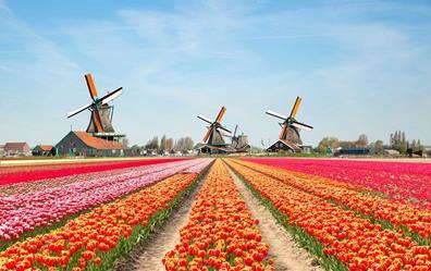 cối xây gió Hà Lan
